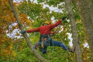Why Call a Tree Surgeon?
